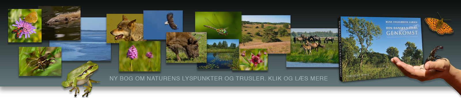 Den danske naturs genkomst – ny bog af Rune Engelbreth Larsen