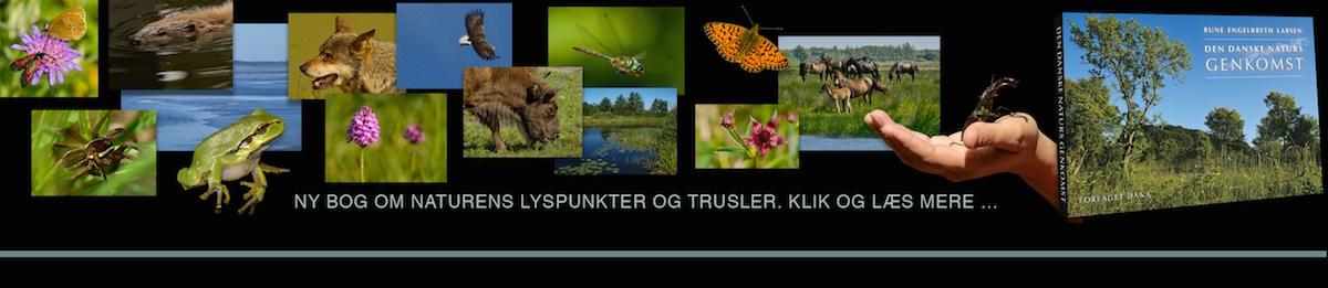 Ny bog af Rune Engelbreth Larsen: 'Den danske naturs genkomst' med masser af naturfotos – bestil eller læs mere om bogen her ...