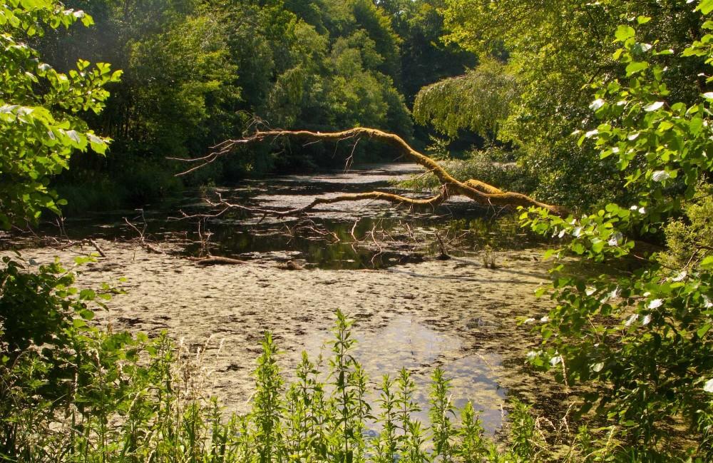 Lille Fønstrup Dam i Gribskov (foto: Rune Engelbreth Larsen)