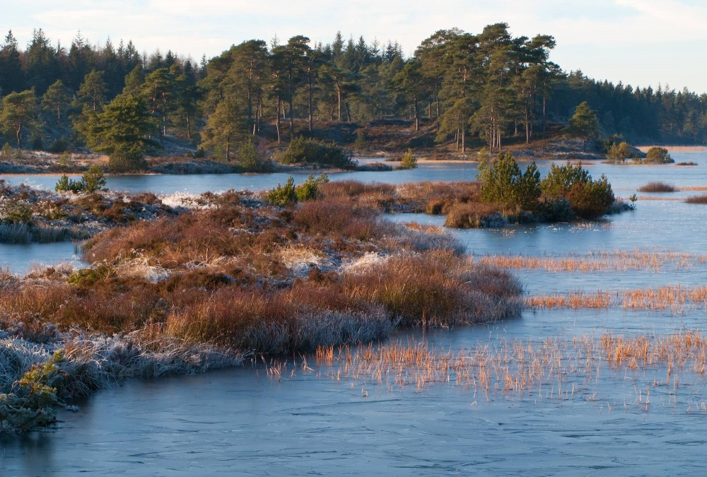 Syvårssøerne, Frederikshåb Plantage (foto: Rune Engelbreth Larsen)