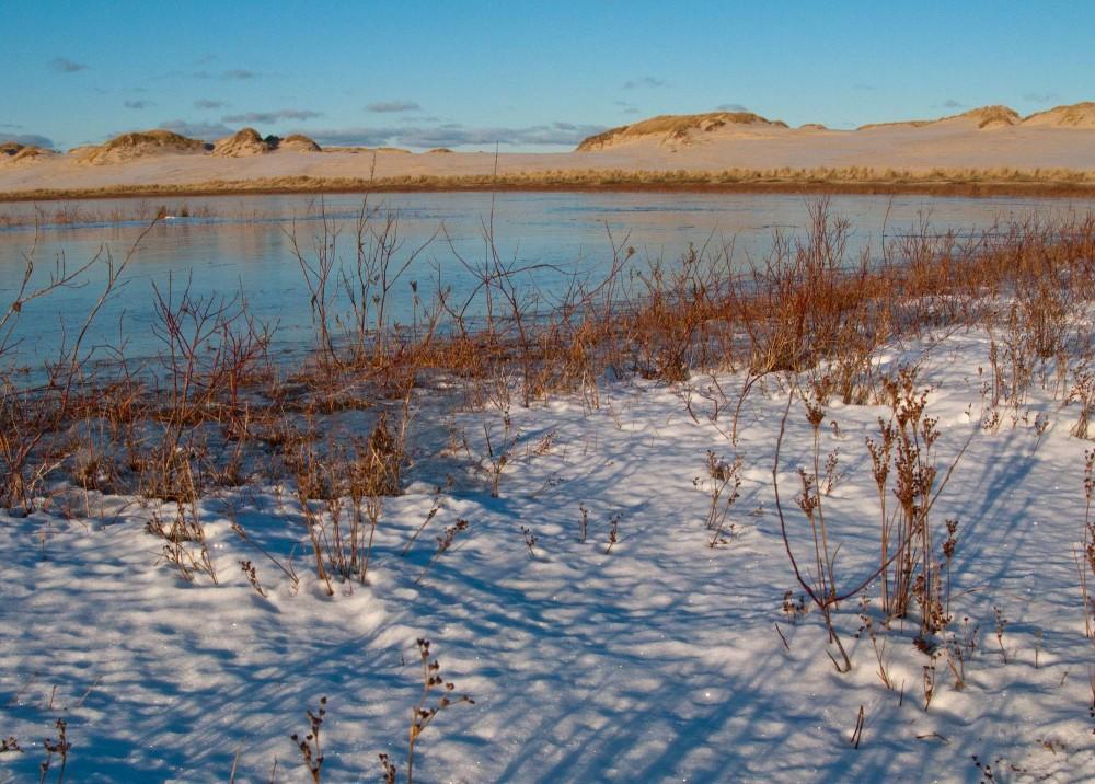 Vinterudsigt ved Råbjerg Mile (foto: Rune Engelbreth Larsen)