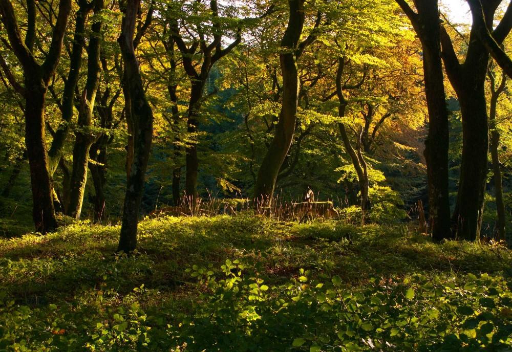 Kyø Skov, urørt skov i Rold Skov (foto: Rune Engelbreth Larsen)