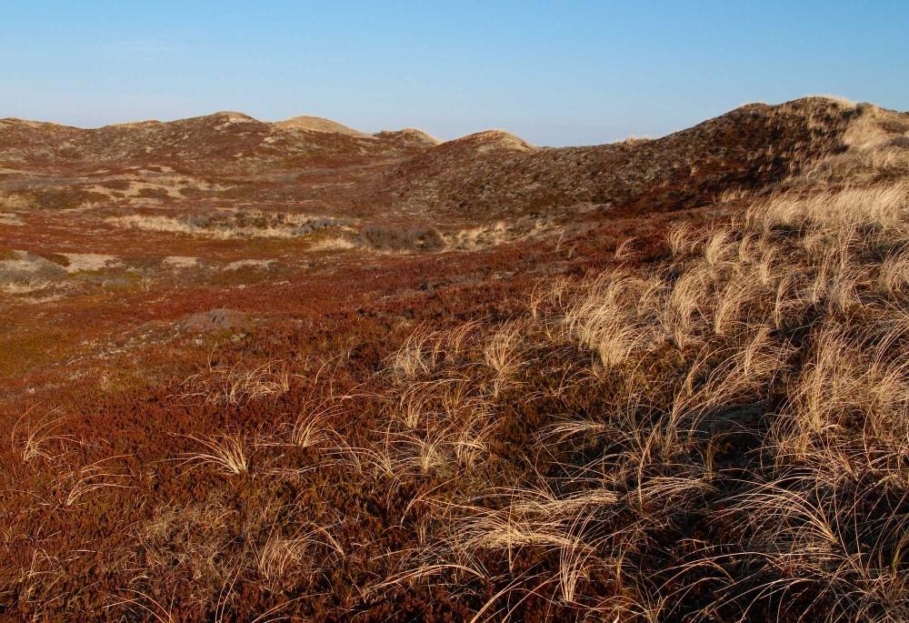 Klitnatur i Hanstholm Vildtreservat en smuk aprildag (foto: Rune Engelbreth Larsen)