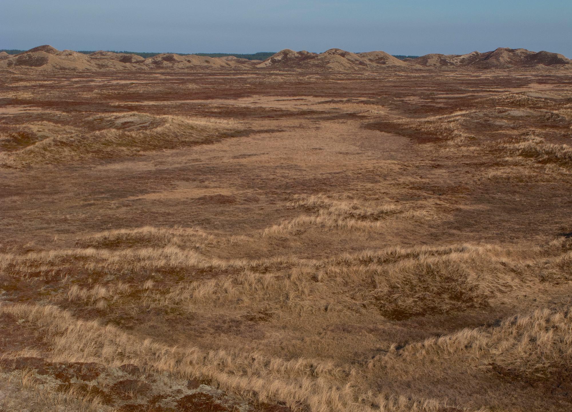 Vilde vidder i vildmarken i Hanstholm Vildtreservat (foto: Rune Engelbreth Larsen)