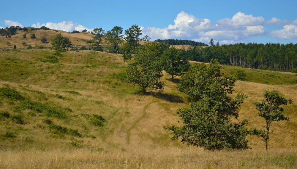 Mols Bjerge (foto: Rune Engelbreth Larsen)