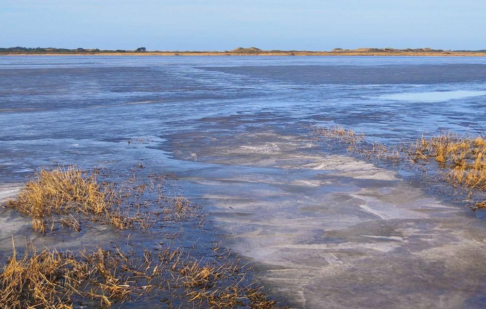 Et lille hjørne af den 915 hektar store Filsø en frostklar morgen, marts (foto: Rune Engelbreth Larsen)