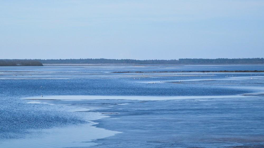 Filsø (foto: Rune Engelbreth Larsen)