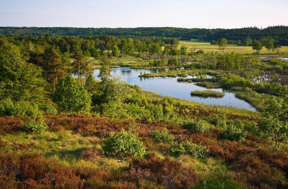 Bølling Sø, maj (foto: Rune Engelbreth Larsen)