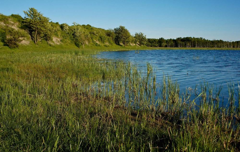 Søen ved Enghøj, Amager (foto: Rune Engelbreth Larsen)