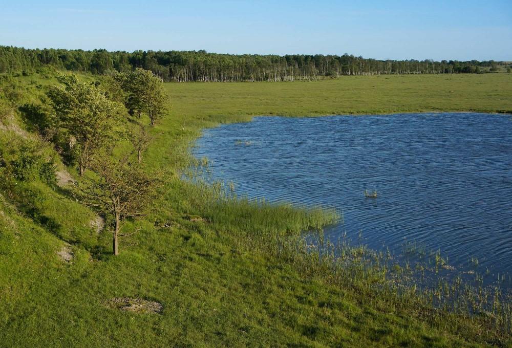 1.500 hektar 'jomfruelig' natur på den sydvestlige del af Amager, statseje (foto: Rune Engelbreth Larsen)