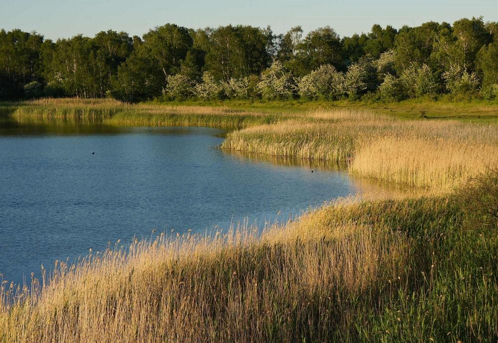Hejresøen, Amager (foto: Rune Engelbreth Larsen)
