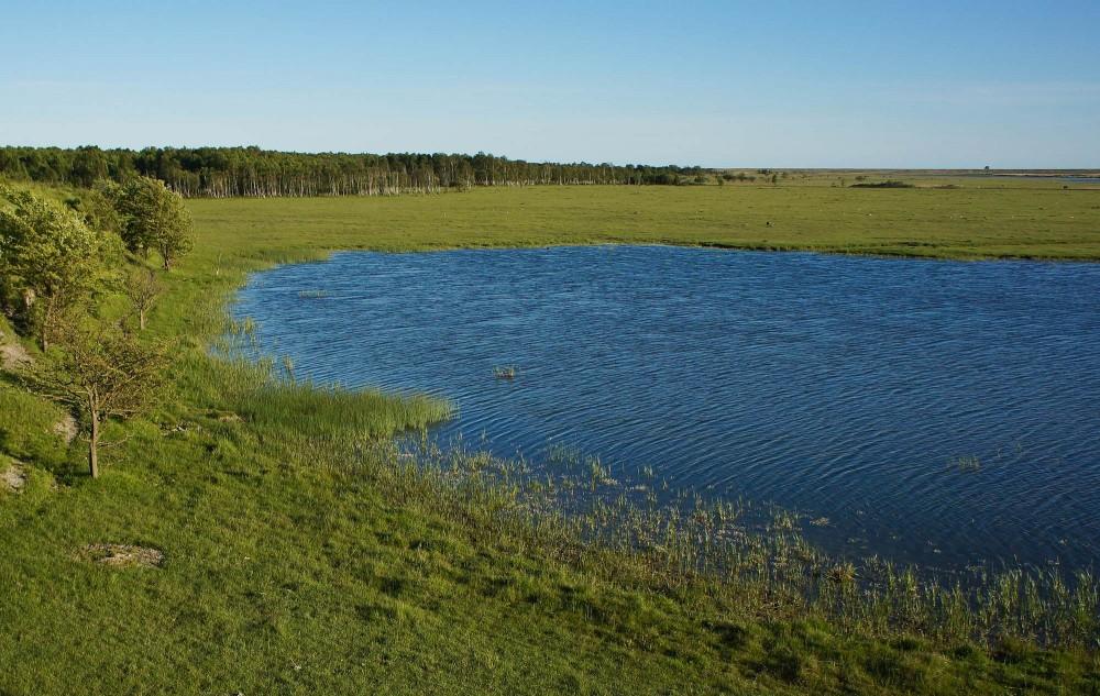 Søen ved Enghøj. Amager, juni (foto: Rune Engelbreth Larsen)