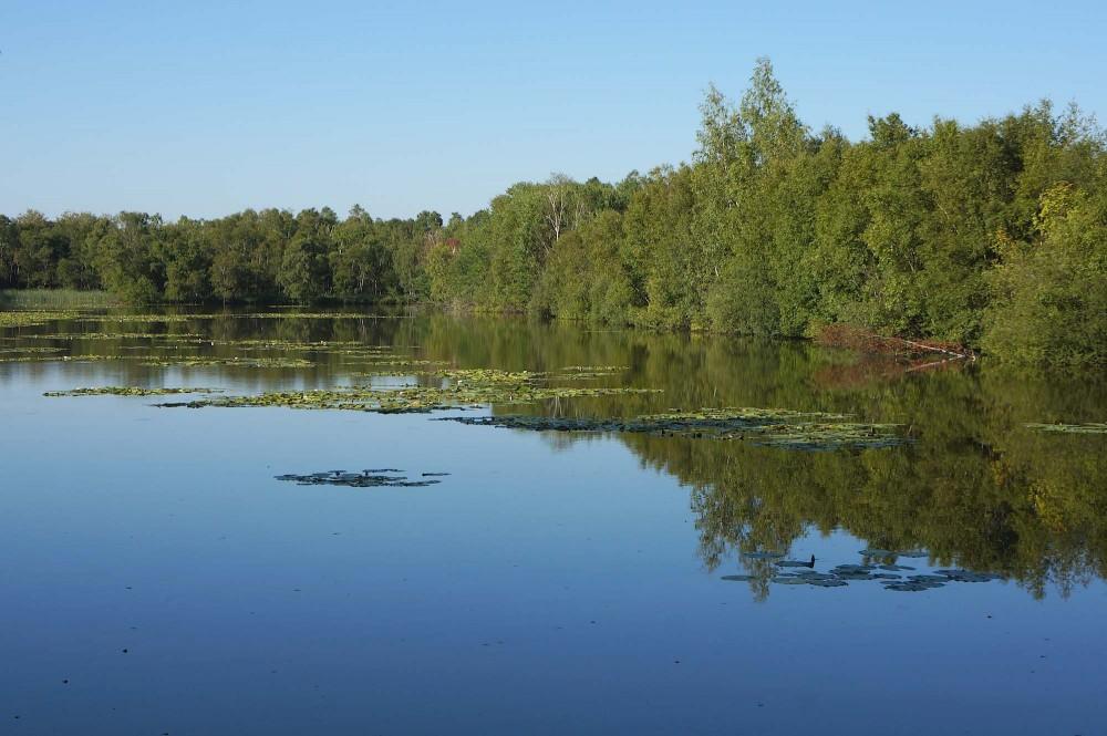 En af de mange tørvegrave, der i dag er søer i Holmegaard Mose, august (foto :Rune Engelbreth Larsen)