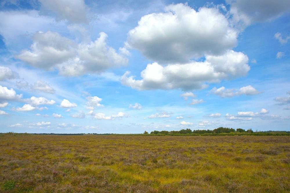Mellemområdet, Lille Vildmose (foto: Rune Engelbreth Larsen)