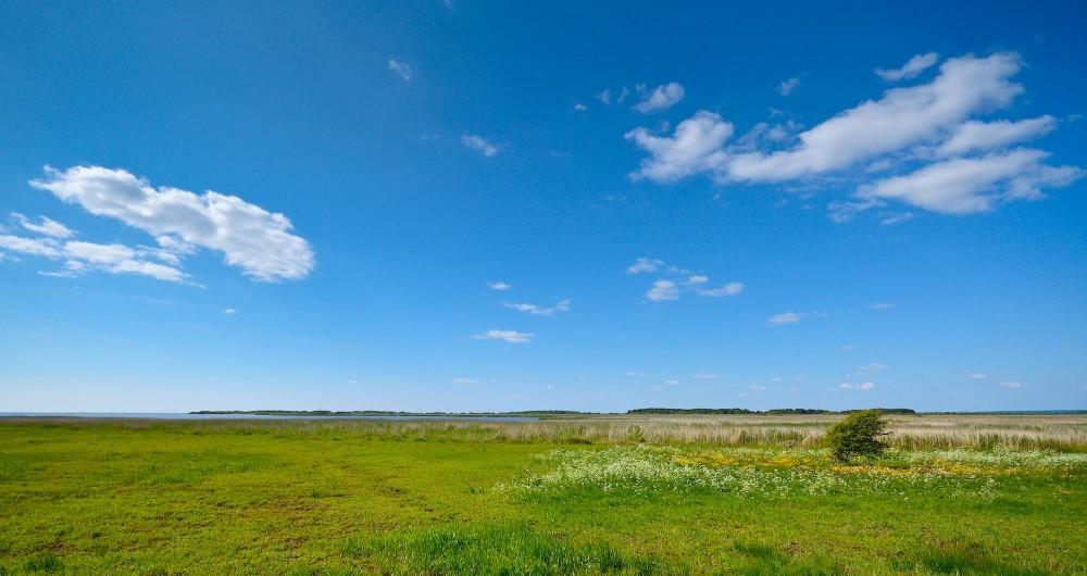 Et hjørne af det 2.500 hektar store floddelta ved Skjern Å (foto: Rune Engelbreth Larsen)