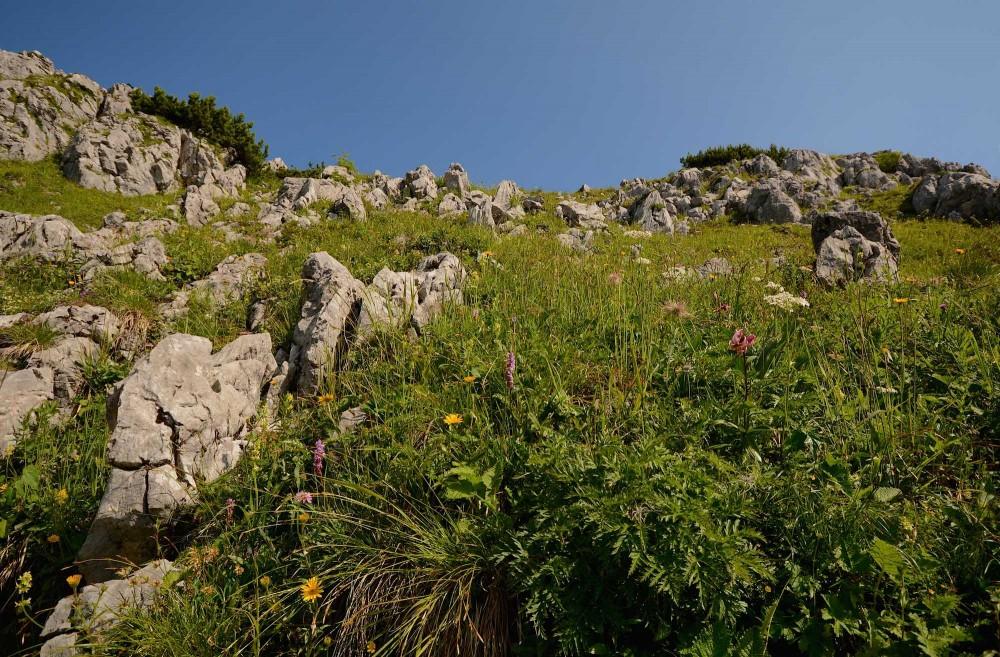 Jenner strækker sig 1.874 meter i vejret, og bjergtoppen er rig på smukke og sjældne blomster (foto: Rune Engelbreht Larsen)