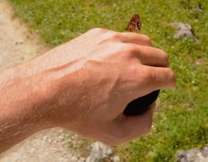 Mørk pletvinge (foto: Rune Engelbreth Larsen)