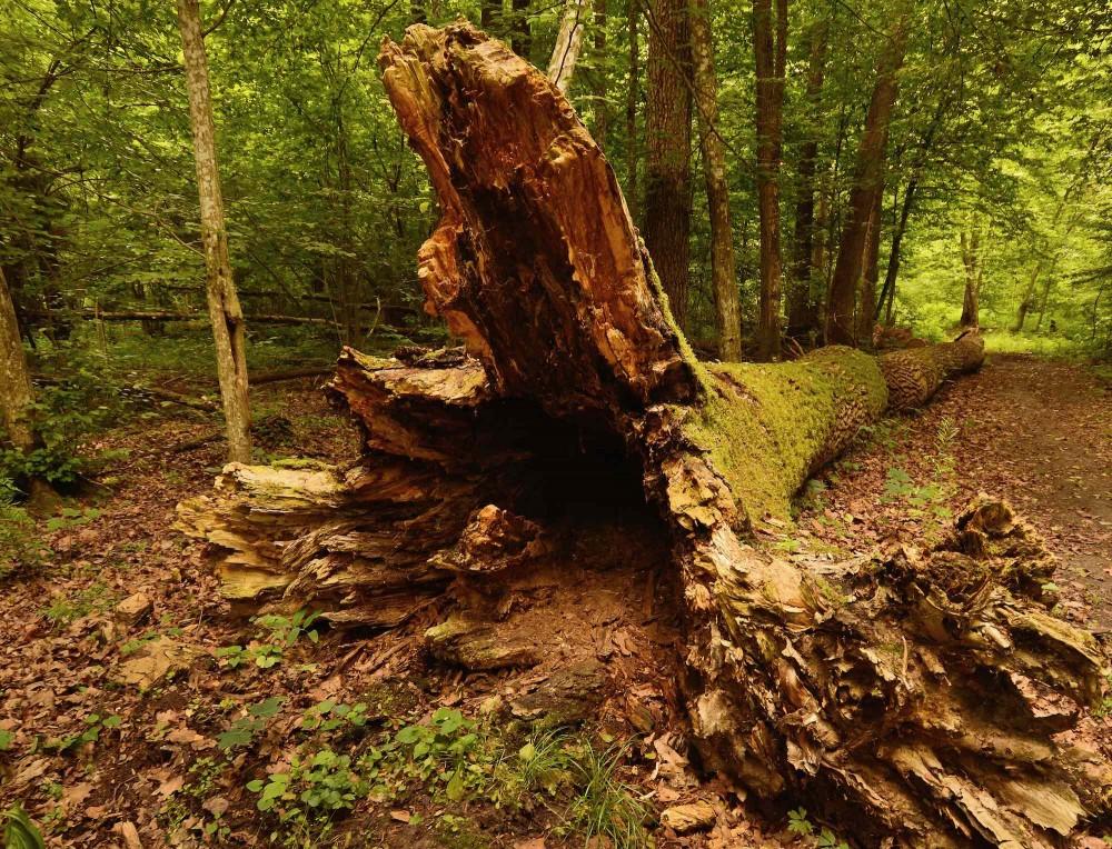 Bialowieza Nationalpark, Polen (foto: Rune Engelbreth Larsen)