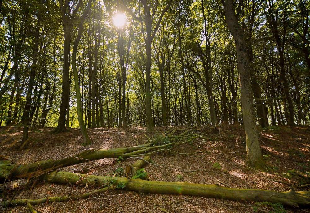 Vildskov eller såkaldt urørt skov (foto: Rune Engelbreth Larsen)