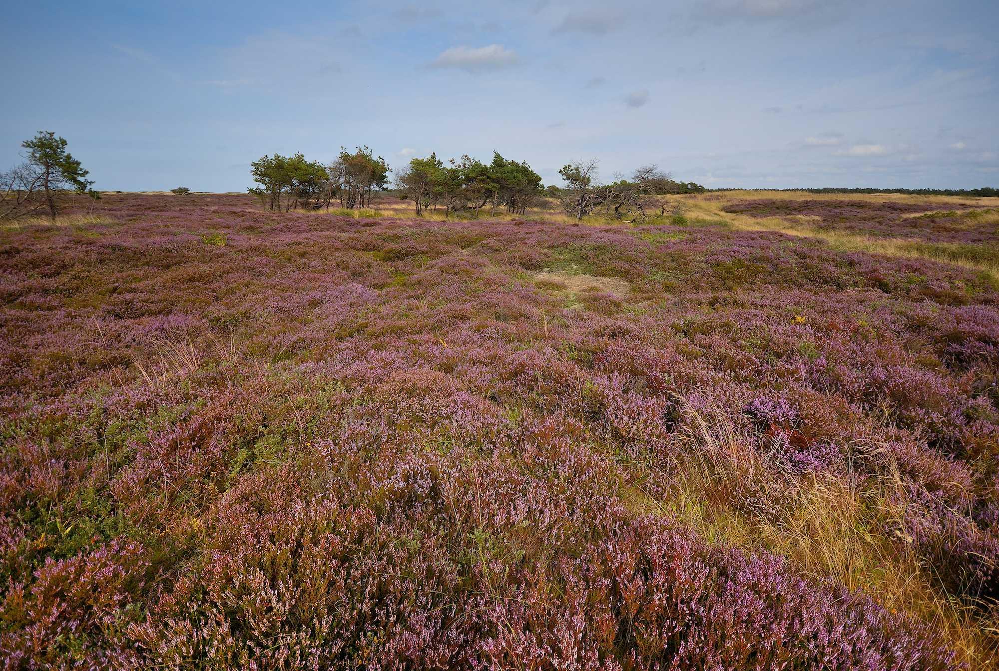 Naturnationalpark melby hede & tisvilde hegn