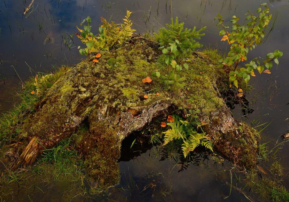 Dødt ved i form af en stub + noget vand = nyt liv (foto: Rune Engelbreth Larsen)