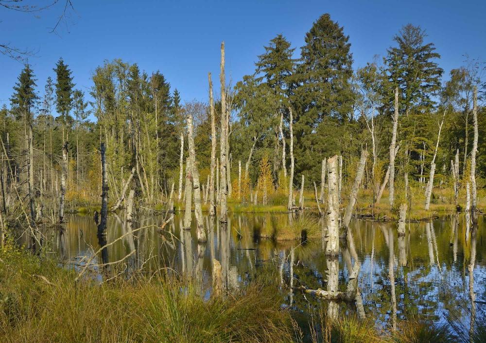 Genetableret vådområde i Gribskov, oktober (foto: Rune Engelbreth Larsen)
