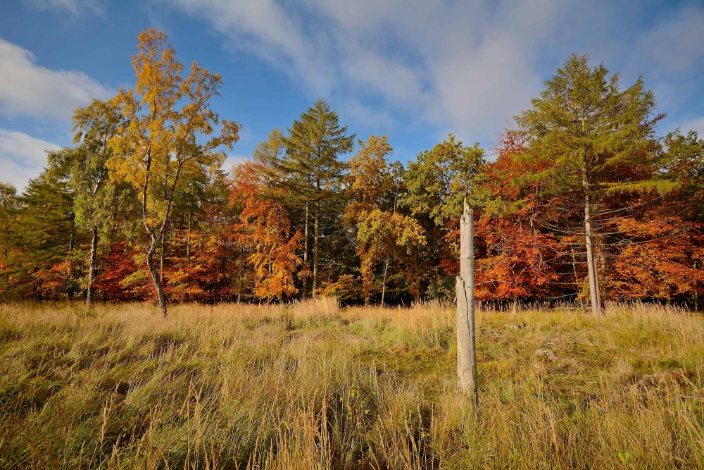 Efterårsfarver fra et hjørne af de ryddede sletter i Bisonskoven (foto: Rune Engelbreth Larsen)