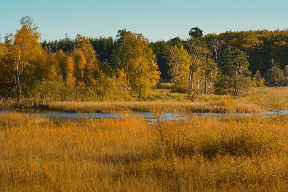 Svinemose, efterår (foto: Rune Engelbreth Larsen)