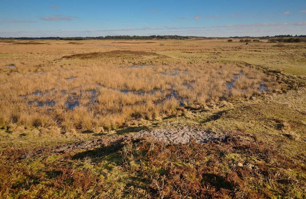 Vidder med god plads til vildere natur – f.eks. vildheste – nord for Grærup Langsø (foto: Rune Engelbreth Larsen)