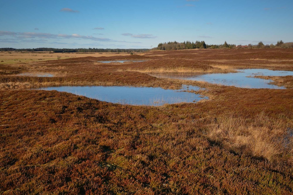 Lyngklædte bakker i rødbrune vinterfarver nordøst for Grærup Langsø (foto: Rune Engelbreth Larsen)