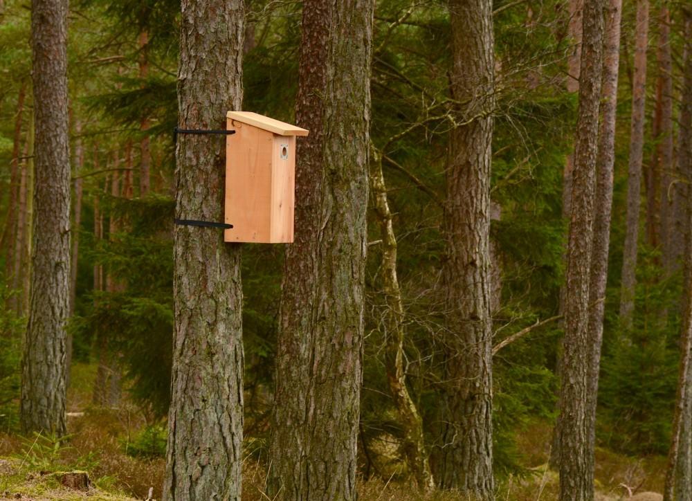 Fuglekasse i naturen? Hvorfor? Fordi skoven ikke er naturlig længere, og mange fugle, der flytter ind i hule træer, kan ikke finde hule træer, og så må Naturstyrelsen give dem et andet hus ... (foto: Rune Engelbreth Larsen)