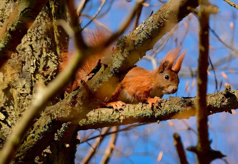 Egern titter frem (foto: Rune Engelbreth Larsen)