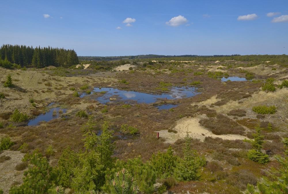 Hedesøer og indlandsklitter i et område af Stråsø Plantage, som Naturstyrelsen ryddede for nåletræer i 2005 (foto: Rune Engelbreth Larsen)