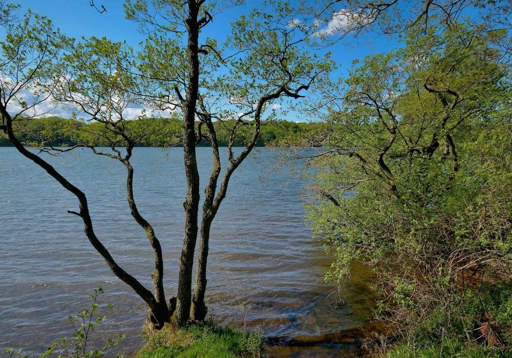 Hald Sø. Et kig ud mellem træerne fra østsiden, lidt nord for Mostgård Bæk (foto: Rune Engelbreth Larsen)