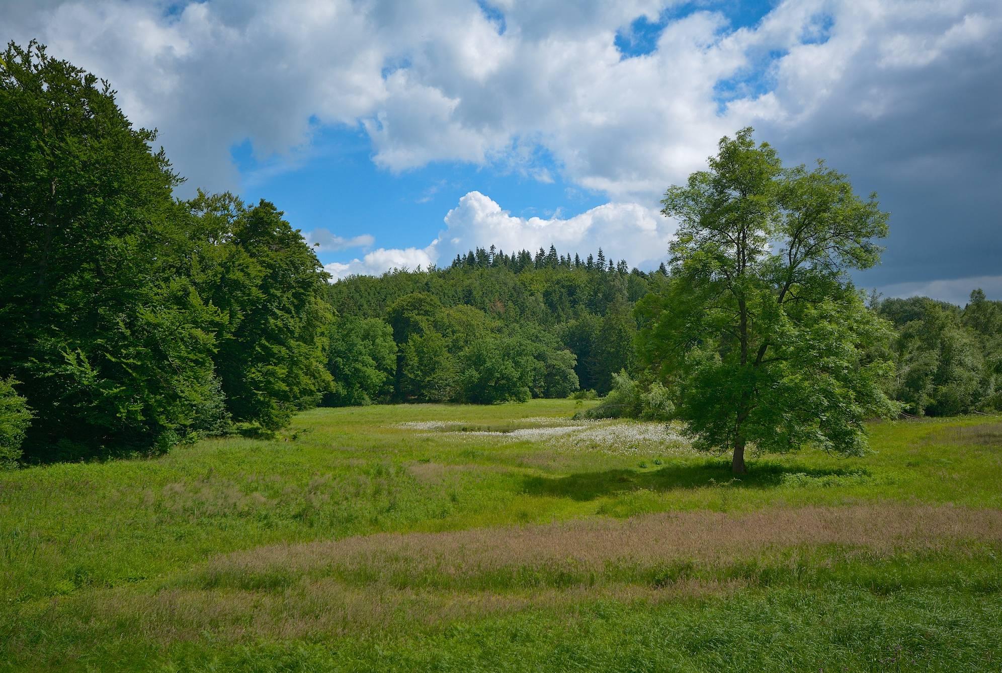 Skoveng i Bidstrup Skovene (foto: Rune Engelbreth Larsen)