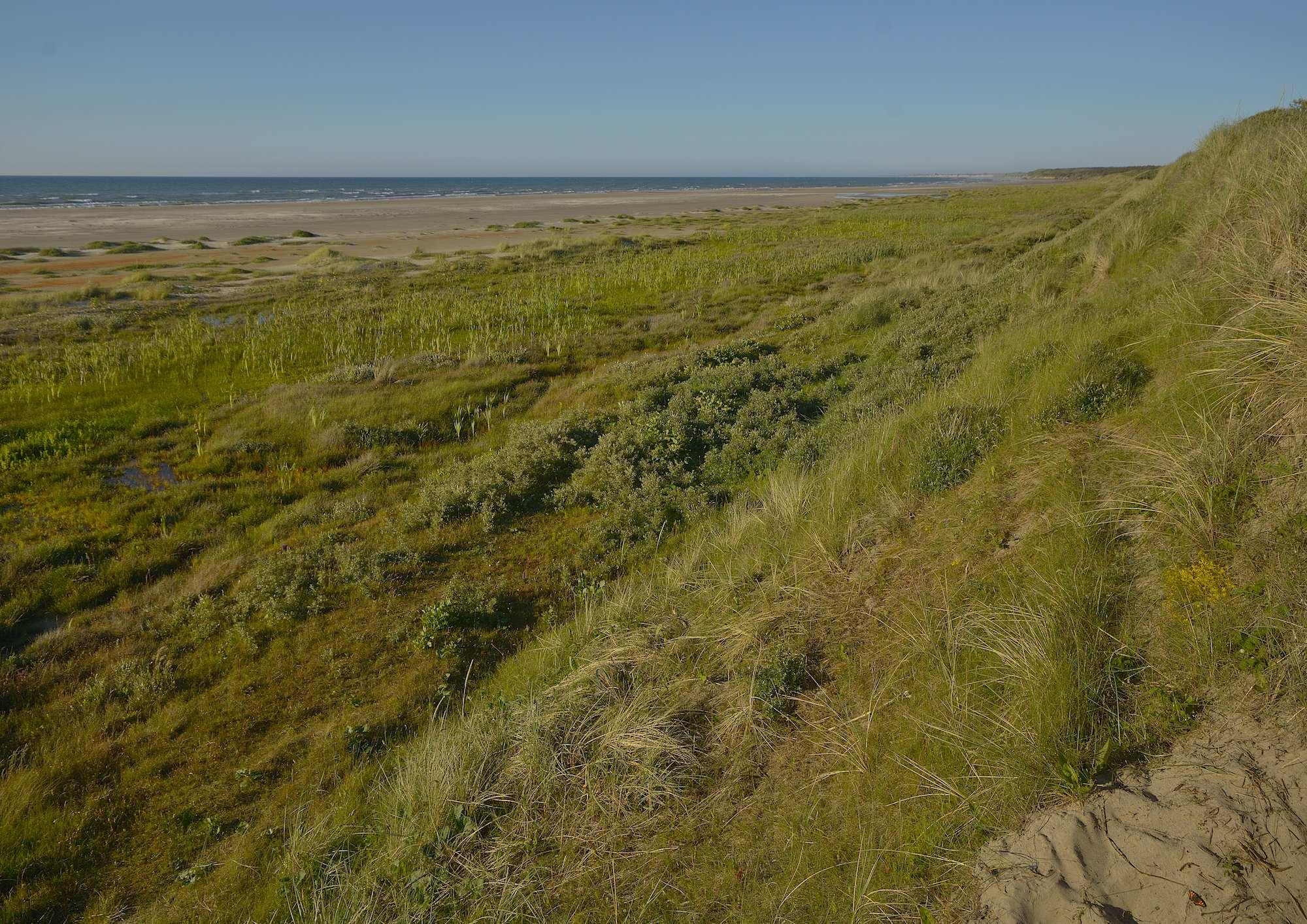 Kyststrækning nord for Tversted Klitplantage (foto: Rune Engelbreth Larsen)