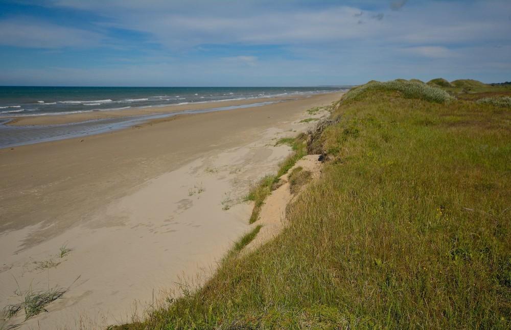 Stranden ved Tannis Bugt (foto: Rune Engelbreth Larsen)