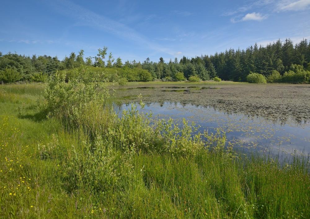 Hjorts Sø, Tversted Klitplantage (foto: Rune Engelbreth Larsen)