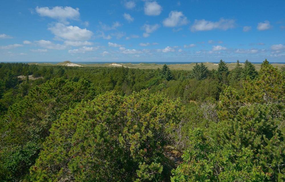 Muren. Skagen Klitplantage presser her klitnaturen ud på nogle striber ved kysten (foto: Rune Engelbreth Larsen)