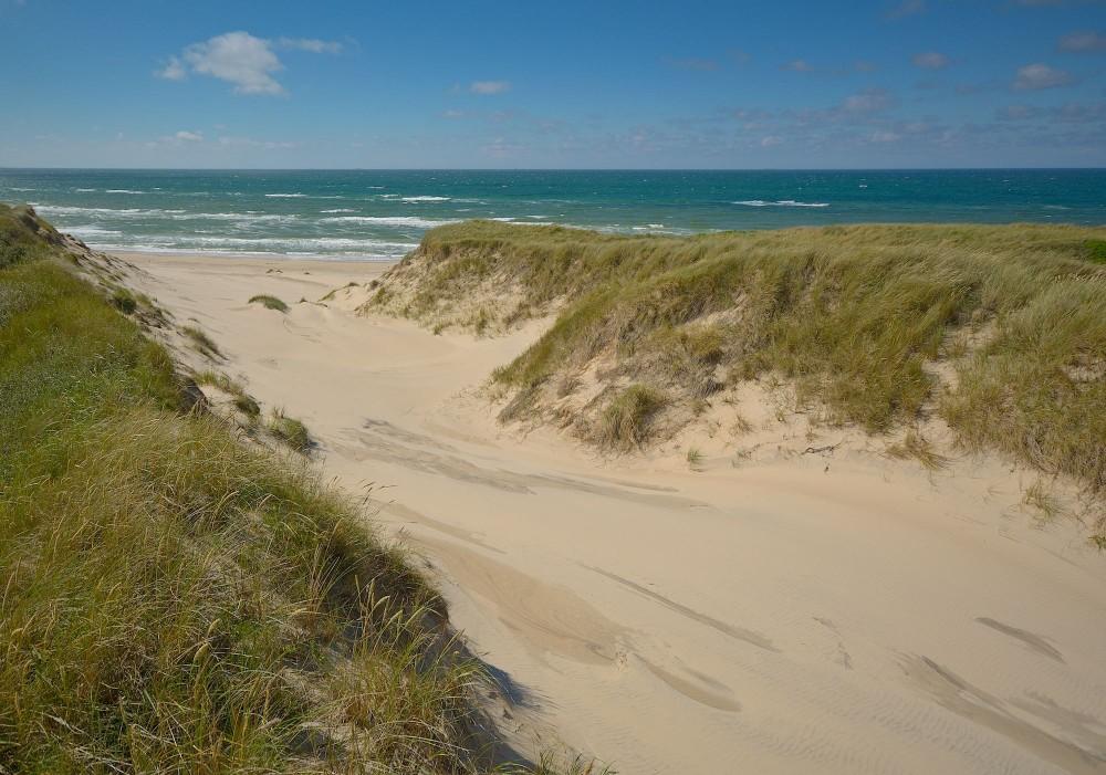 Hul i klitrækken, og sandet har fri passage til gavn for mange varmekrævende arter i klitnaturen (foto: Rune Engelbreth Larsen)