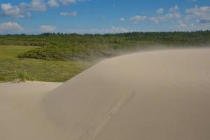 Sandflugt ved Skagen Klitplantage (foto: Rune Engelbreth Larsen)