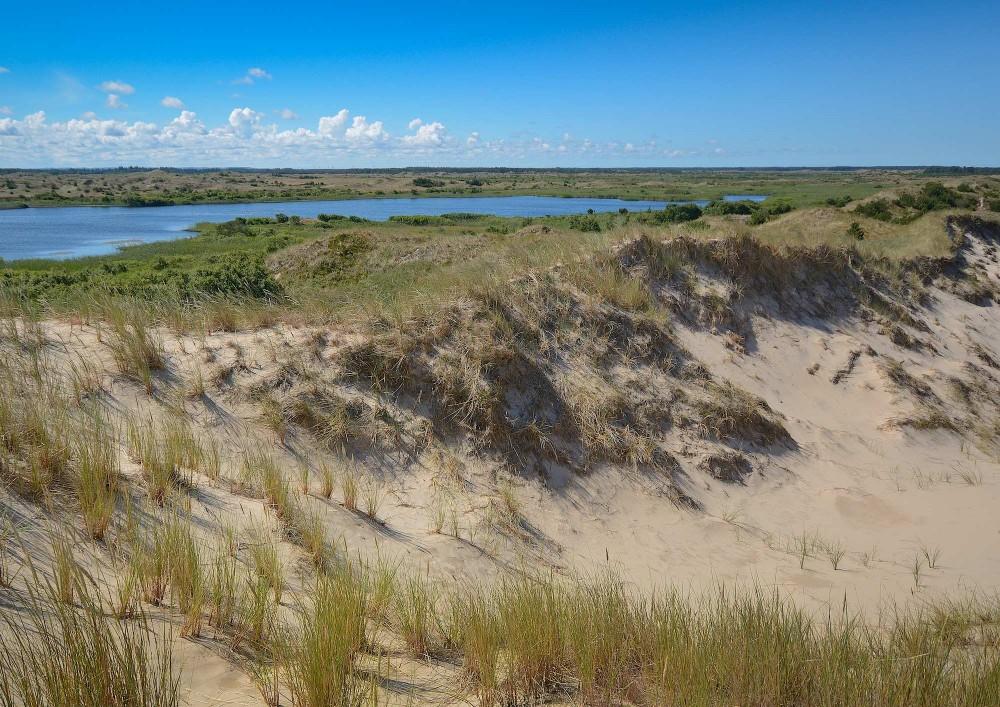 Syd for Råbjerg miles ene 'arm' ligger de gamle milesøer, som er opstået bag milen (foto: Rune Engelbreth Larsen)