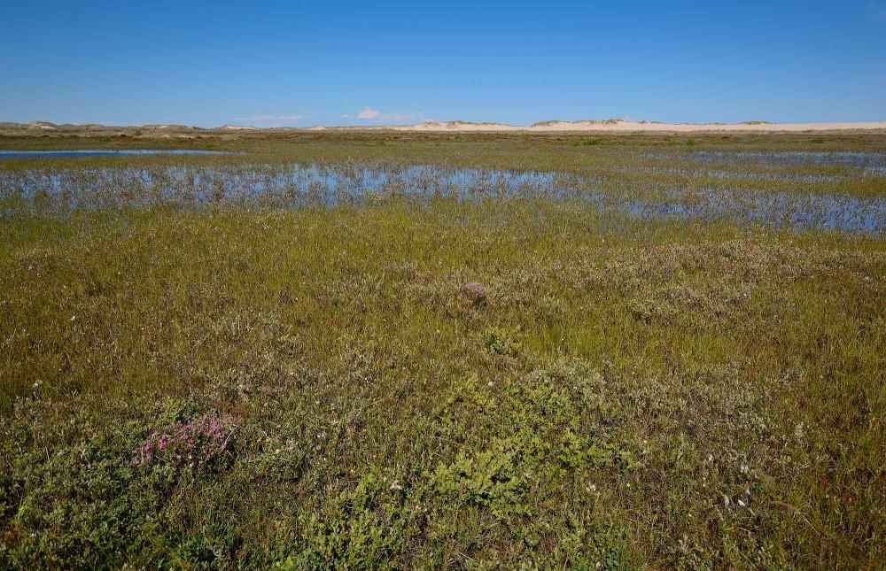 Biowide 003 Råbjerg Mile – en af de lokaliteter, hvis biodiversitet undersøges i detalje af forskere (foto: Rune Engelbreth Larsen)