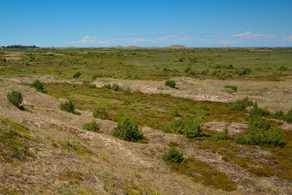 Råbjerg Hede med udsigt mod vest – havet kan lige akkurat skimtes til højre i horisonten (foto: Rune Engelbreth Larsen)