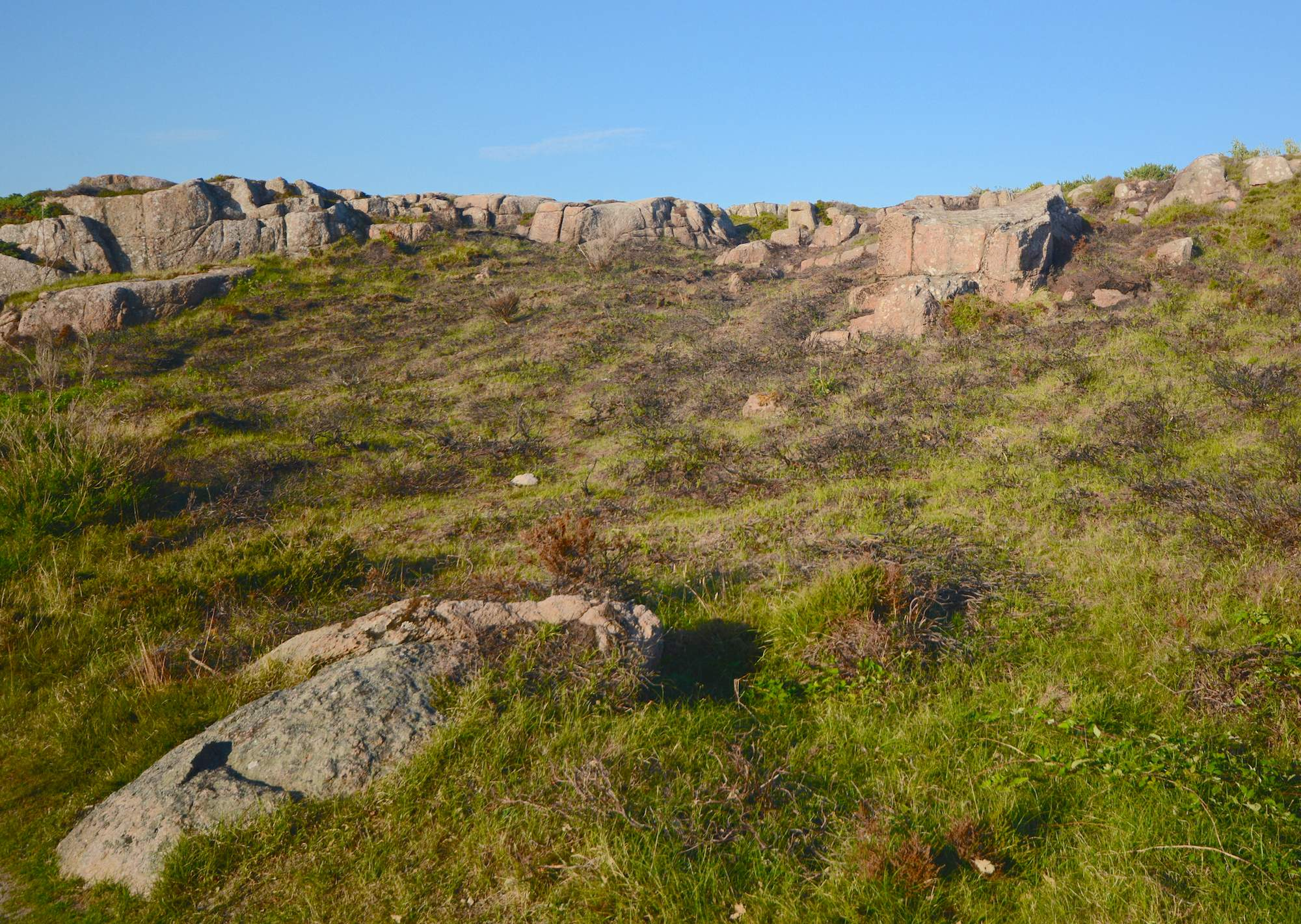 Hammerknuden, Borholm. Klippehede udsat for kontrolleret afbrænding for at forynge hedelyngen og komme anden tilgroning til livs (foto: Rune Engelbreth Larsen)