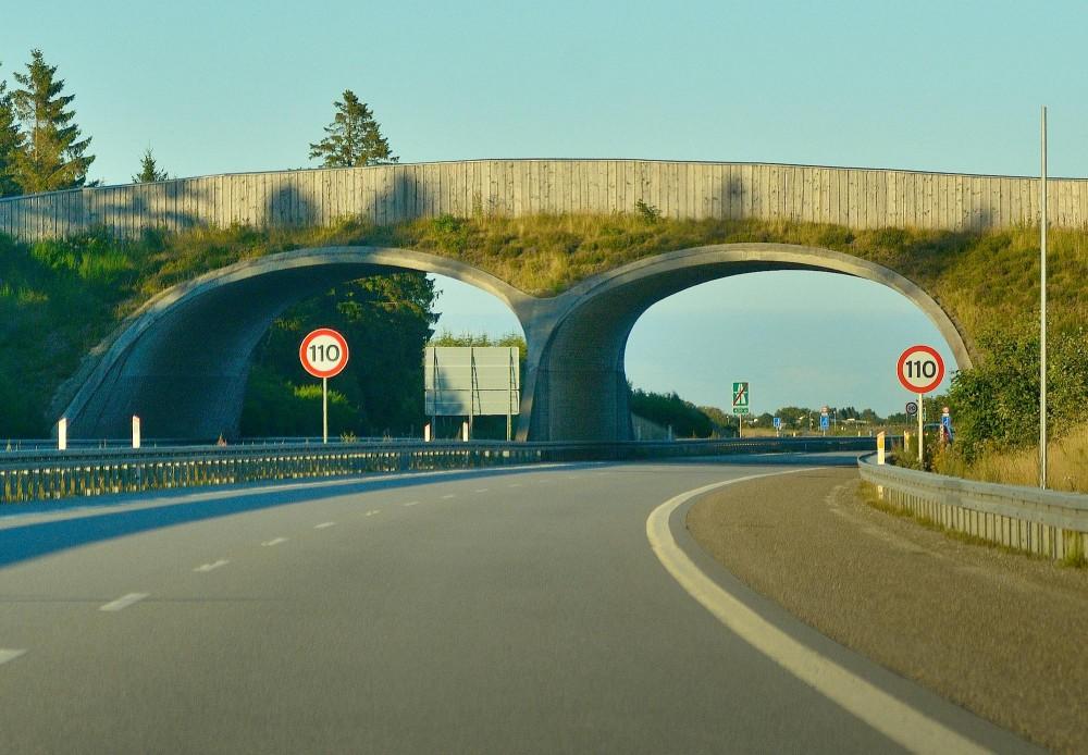 En faunabro som denne har –når det kommer til stykket – ikke megen effekt for spredningen af arter i almindelighed eller sammenknytningen af naturområder, men den kan være vigtig for større planteæderes mulighed for at passere stærkt trafikerede veje (foto: Rune Engelbreth Larsen)