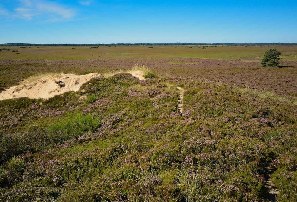Randbøl Hede, der strækker sig over ca. 750 hektar, er Danmarks største indlandshede (foto: Rune Engelbreth Larsen)