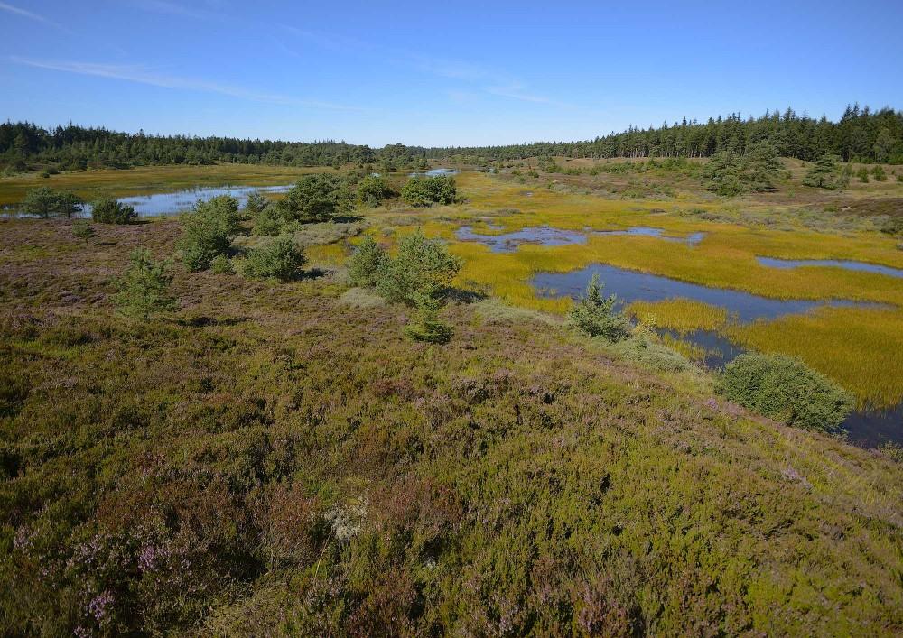 Syvårssøerne i Frederishåb Plantage – potentiale for vildere vidder i en Naturnationalpark Randbøl Hede & Syvårssøerne (foto: Rune Engelbreth Larsen)