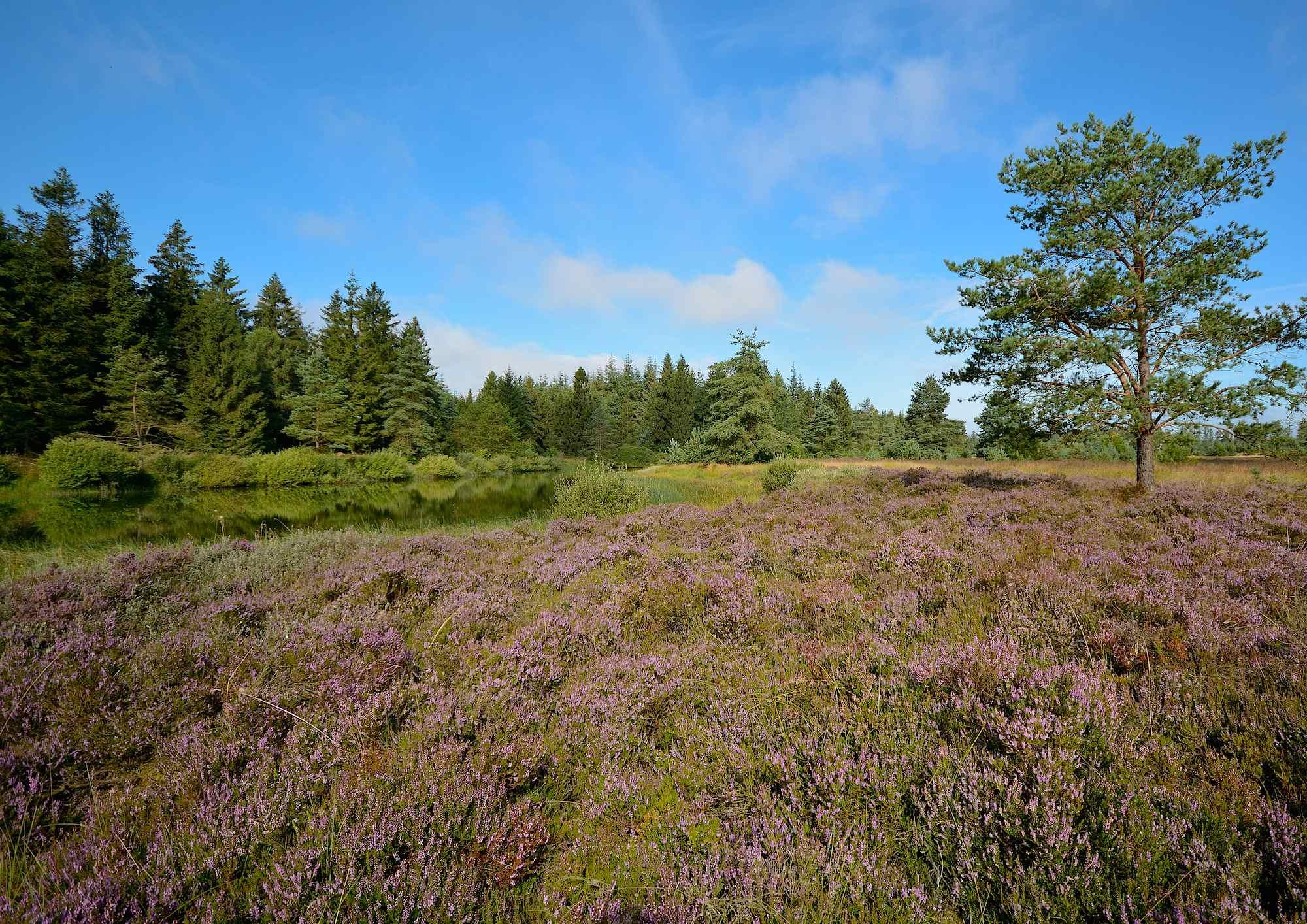 Frederikshåb Plantage (foto: Rune Engelbreth Larsen)