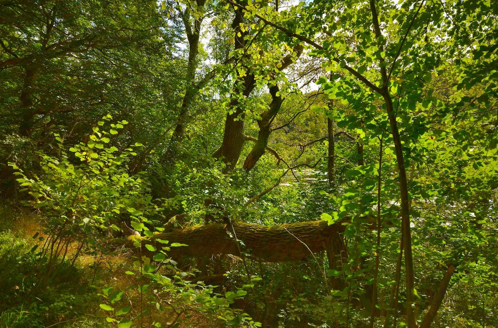 Urørt skov ved Mølledam, Fussingø (foto: Rune Engelbreth Larsen)